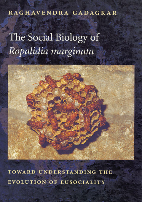 Cover: The Social Biology of <i>Ropalidia marginata</i>: Toward Understanding the Evolution of Eusociality, from Harvard University Press