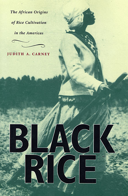 Cover: Black Rice: The African Origins of Rice Cultivation in the Americas, from Harvard University Press