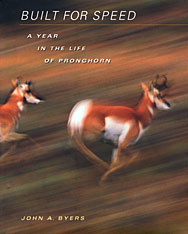 Cover: Built for Speed: A Year in the Life of Pronghorn, by John A. Byers, from Harvard University Press