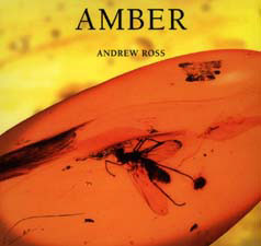 Cover: Amber
