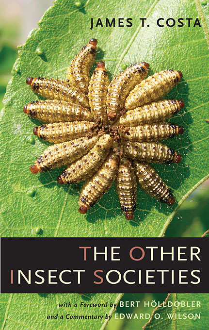 Cover: The Other Insect Societies, from Harvard University Press
