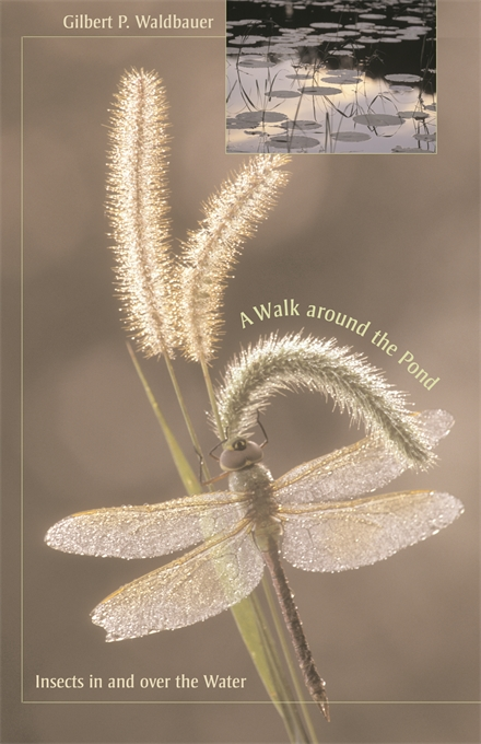 Cover: A Walk around the Pond: Insects in and over the Water, from Harvard University Press