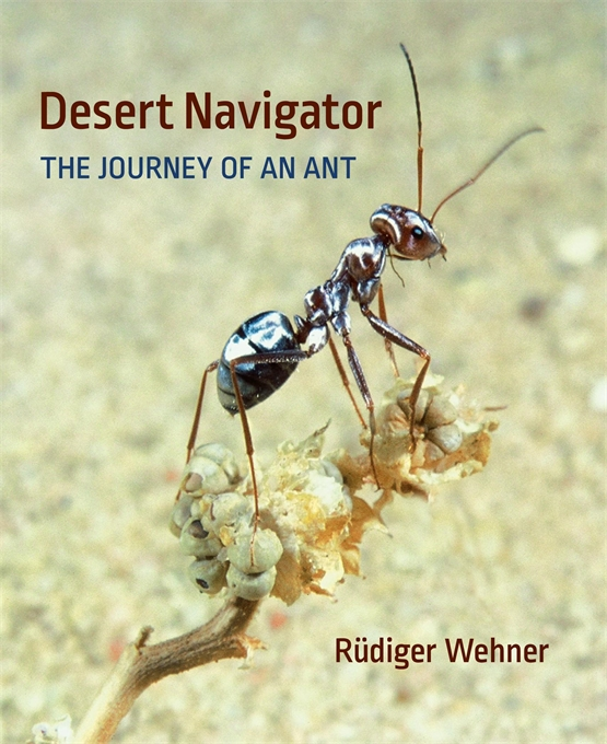 Cover: Desert Navigator: The Journey of an Ant, from Harvard University Press