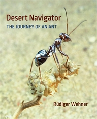 Cover: Desert Navigator in HARDCOVER
