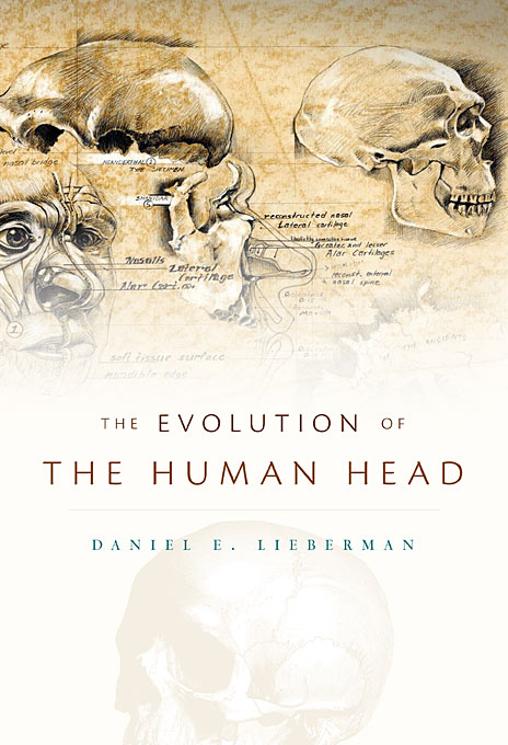 Cover: The Evolution of the Human Head, from Harvard University Press