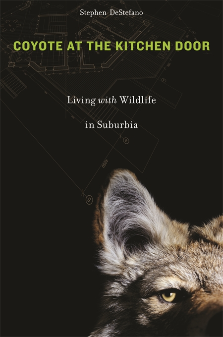 Cover: Coyote at the Kitchen Door: Living with Wildlife in Suburbia, from Harvard University Press