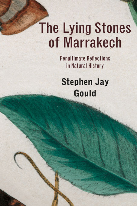 Cover: The Lying Stones of Marrakech: Penultimate Reflections in Natural History, from Harvard University Press