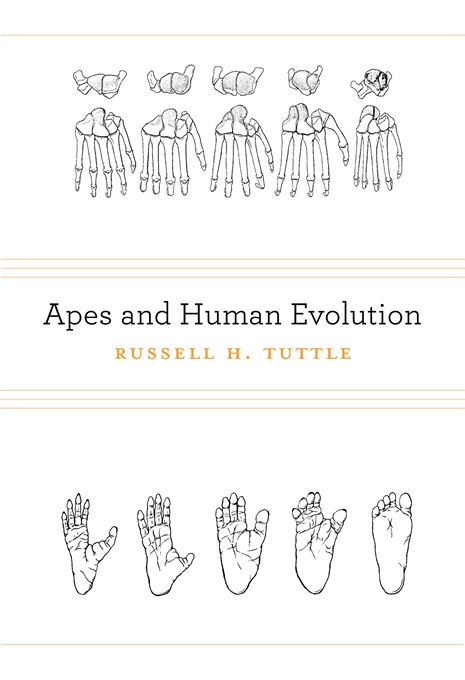 Cover: Apes and Human Evolution, from Harvard University Press