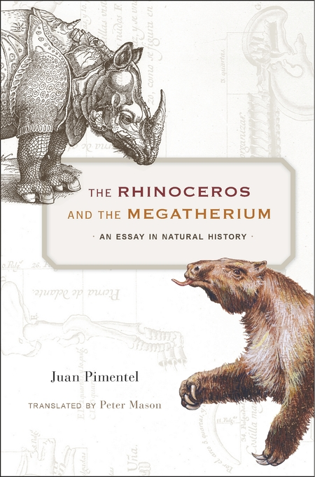 Cover: The Rhinoceros and the Megatherium: An Essay in Natural History, from Harvard University Press